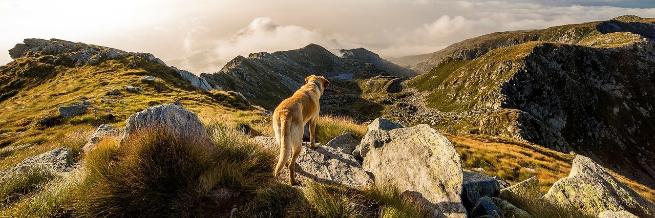 Moving Mountains in the Year of the Earth Dog