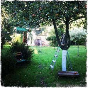 apple tree for gratitude blog